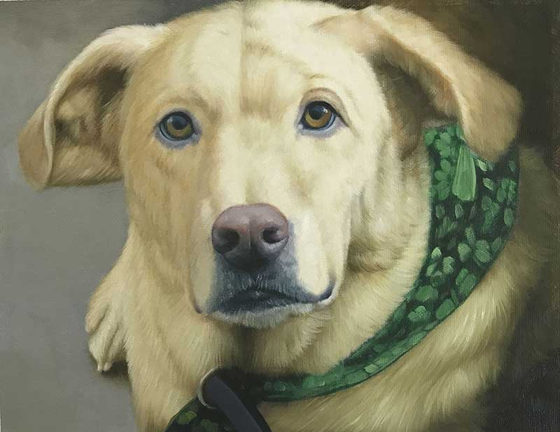 ritratto ad olio da fotografia cane labrador