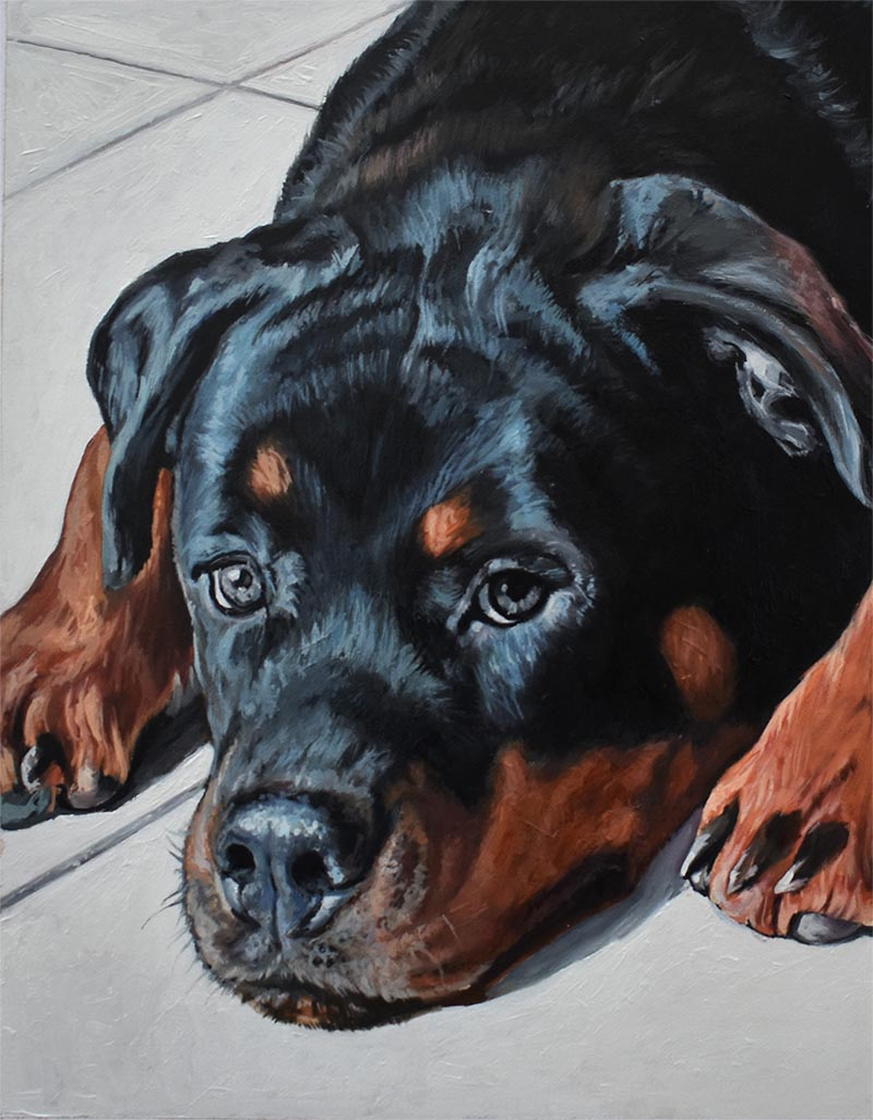 custom pet art of a rottweiler