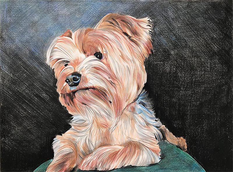custom colored pencil drawing of a small brown dog
