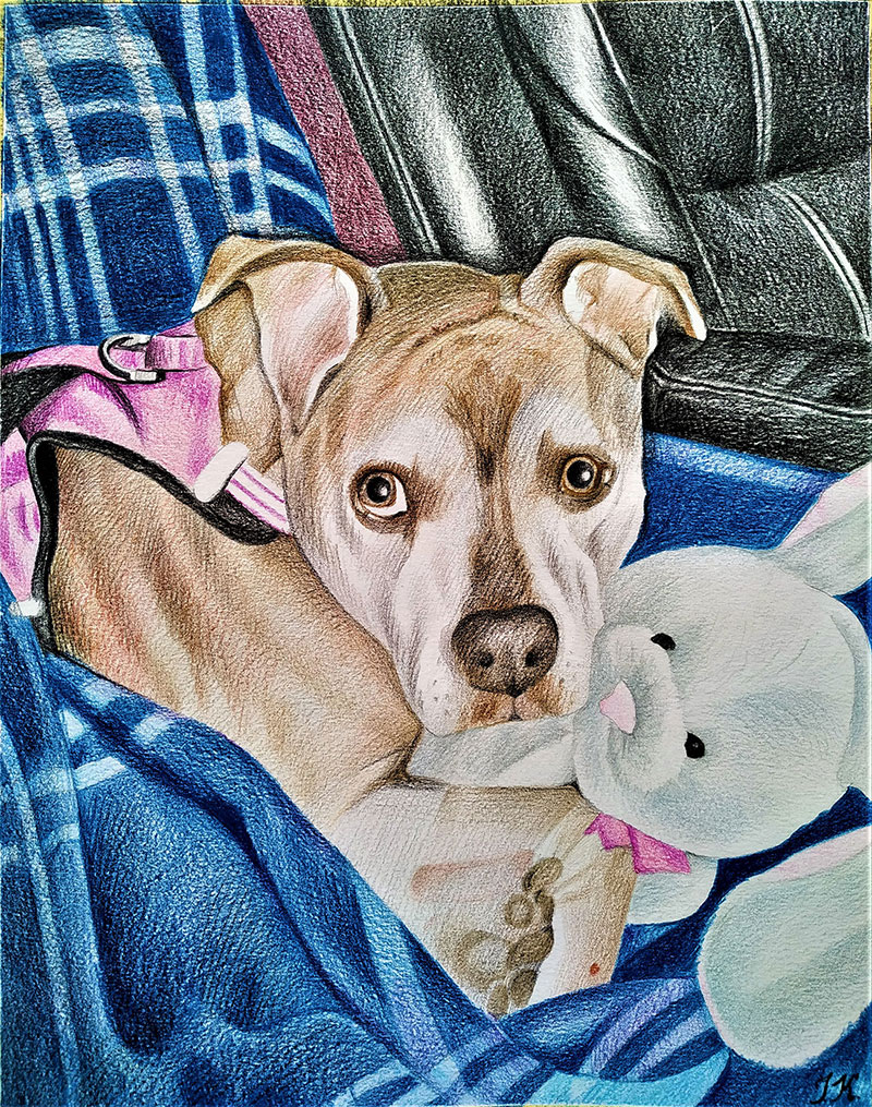 Custom color pencil drawing of a dog