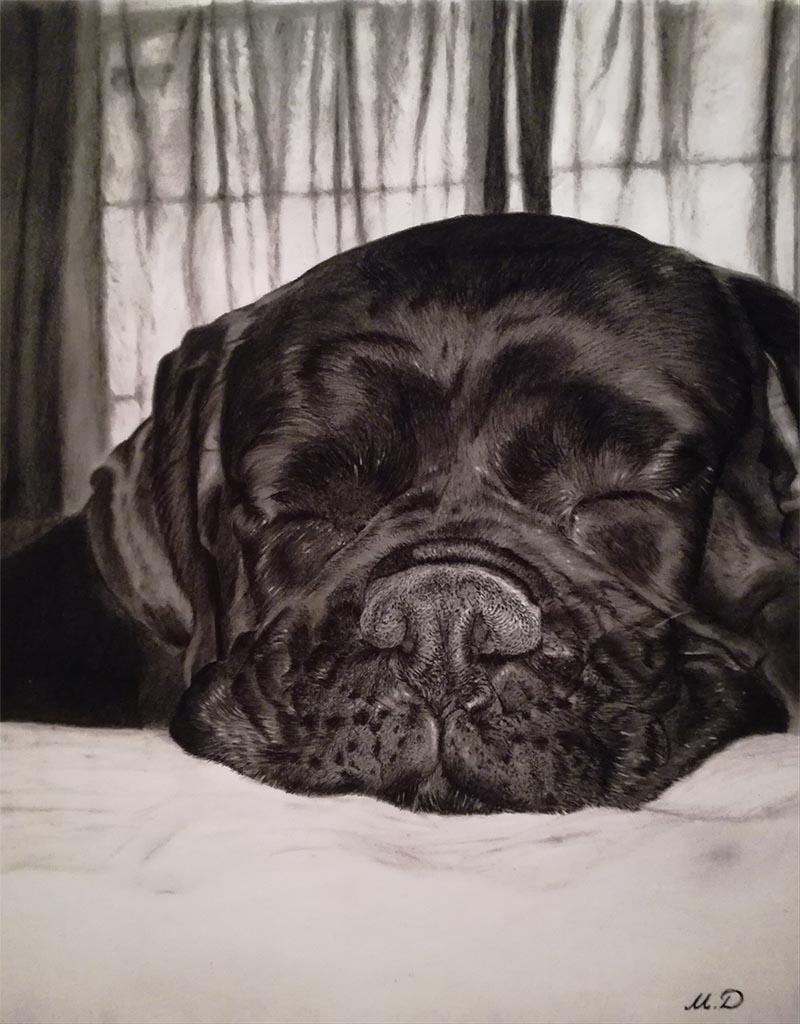 portraits de chiens sur toile