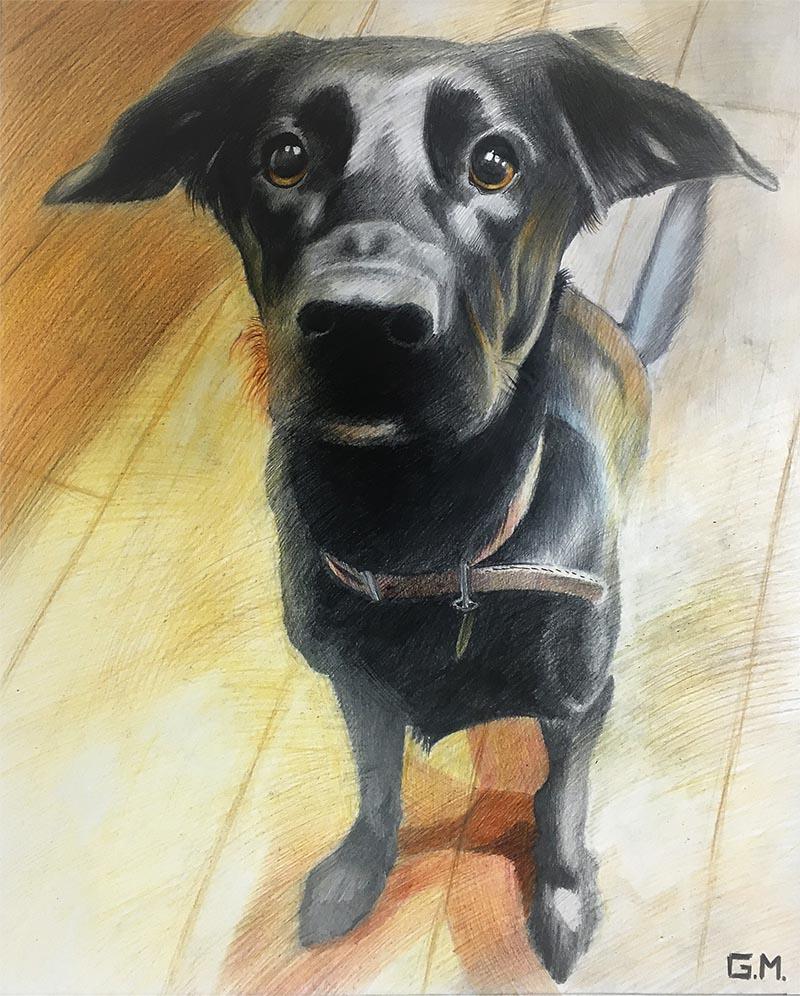 hondenportretten op canvas