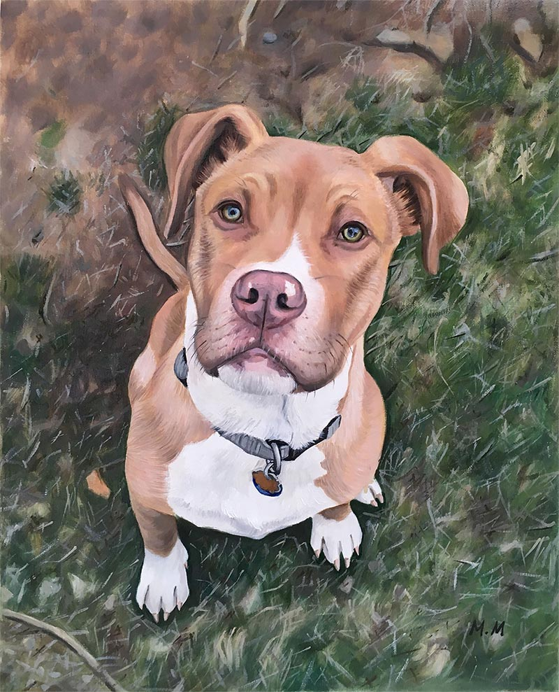 custom oil portrait of light brown pitbull in grass