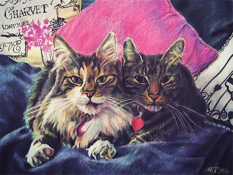 custom colored pencil drawing of two cats laying side by sid