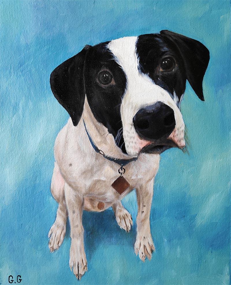 custom oil portrait of black white dog on blue backgroun
