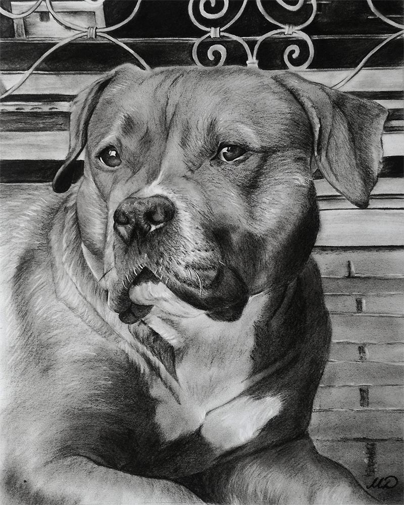 charcoal art of a dog
