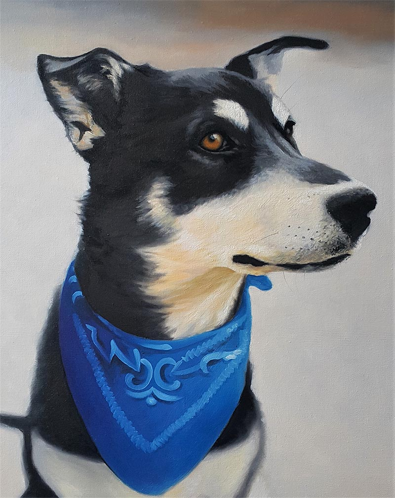 custom oil portrait of black dog with blue bandana