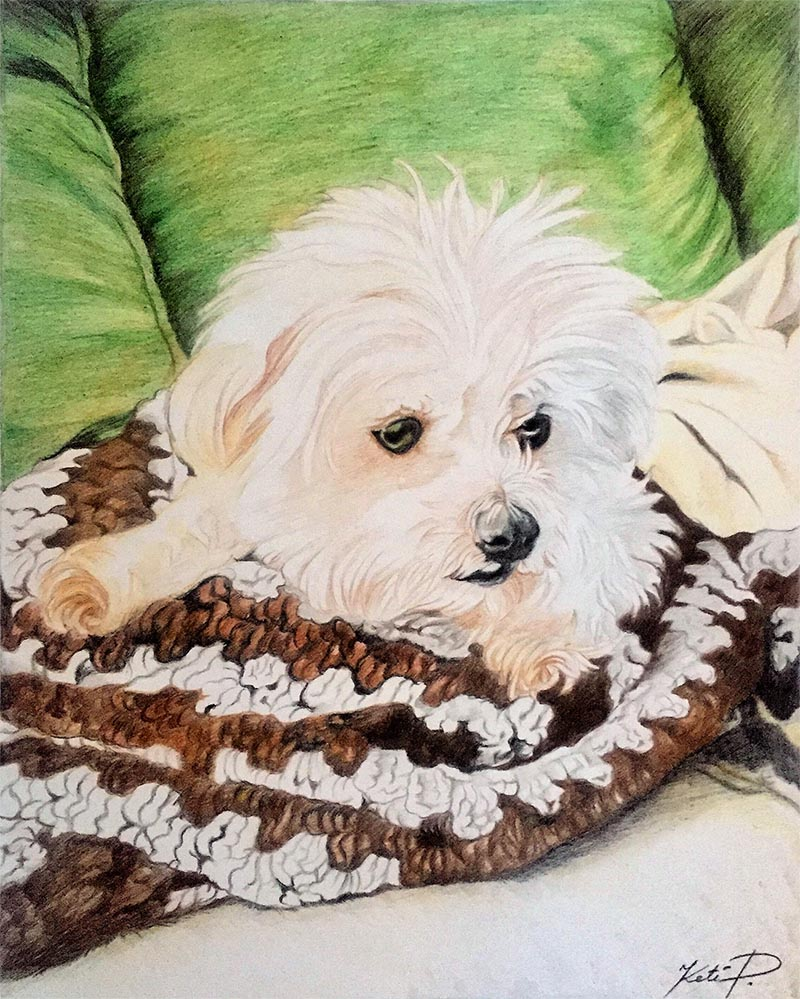 custom colored pencil drawing of a small white puppy