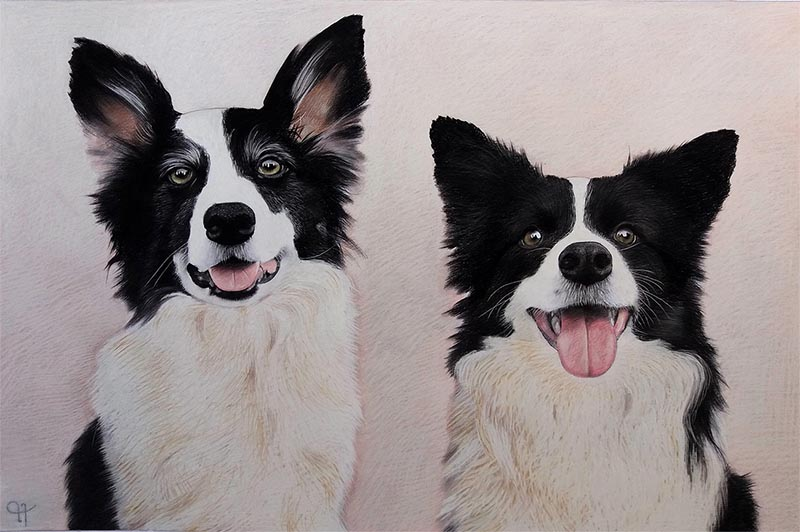 dog portrait painted in pastel