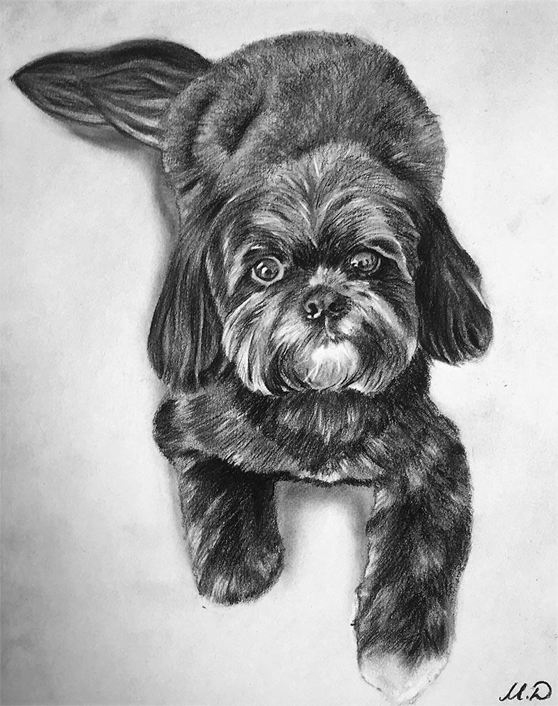 charcoal art of a pet