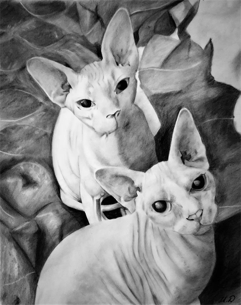 Siamese cat drawing