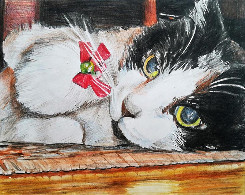 custom colored pencil close up of a black and white cat