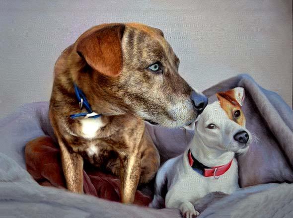 amici a quattro zampe cani olio da fotografia