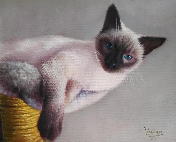 Custom oil portrait of a siames cat with blue eyes