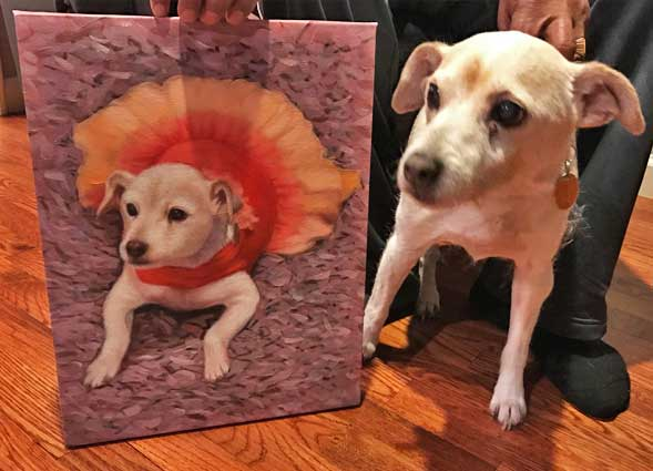 small dog paint your pet