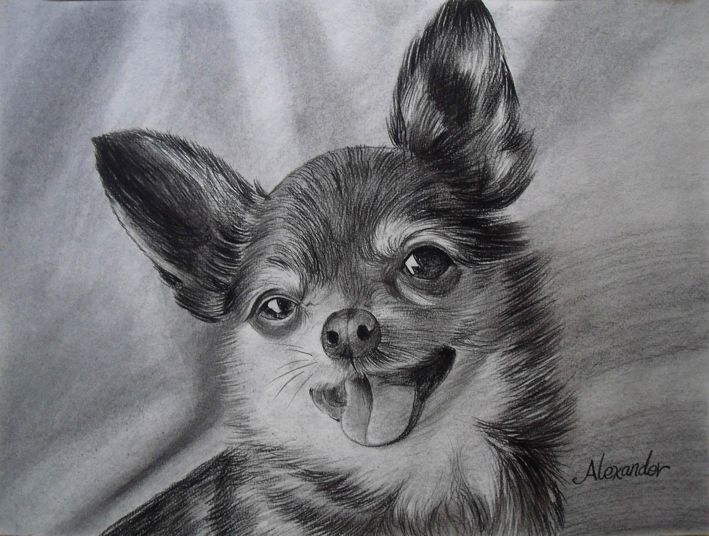 perro personalizado