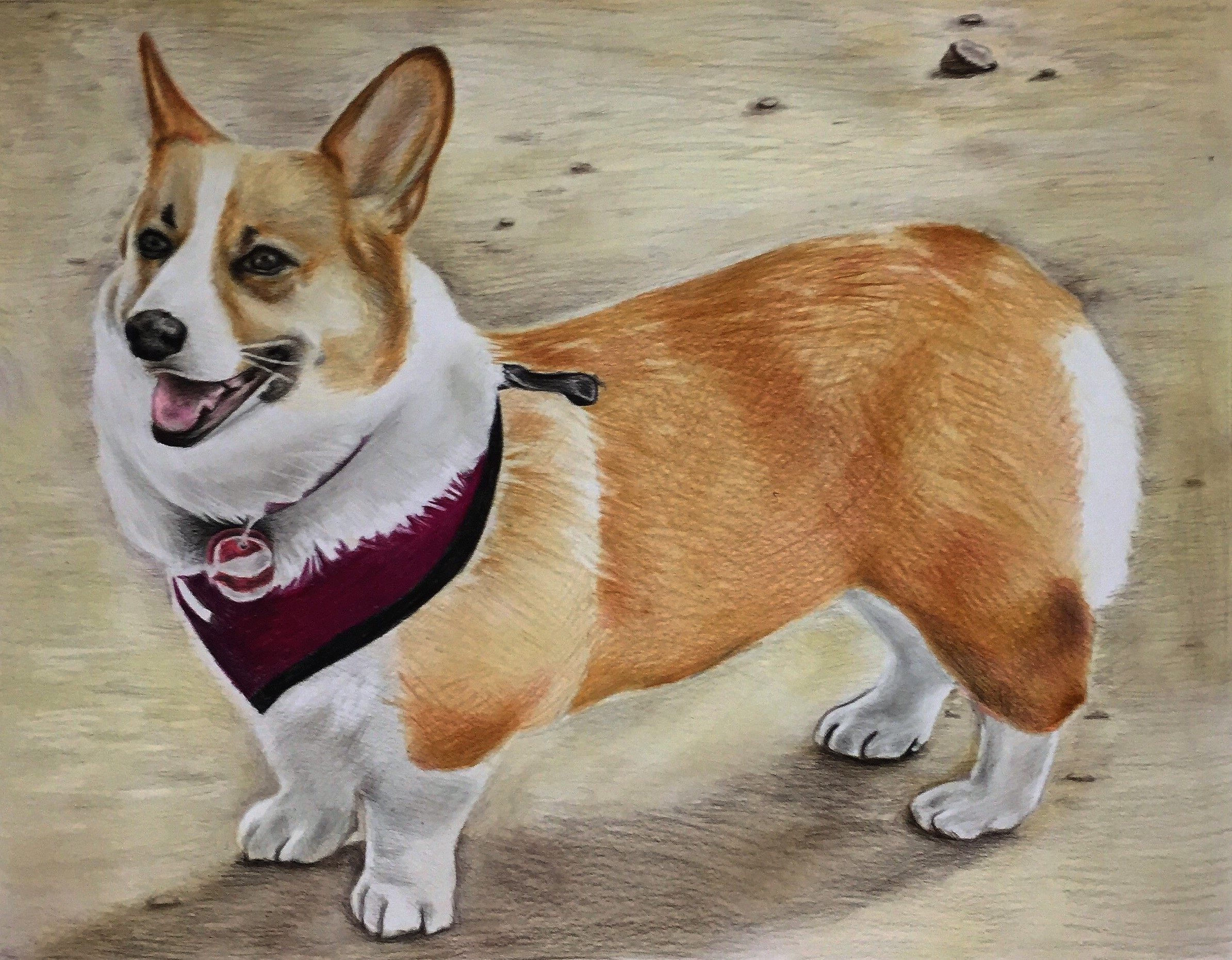 custom colored pencil portrait of a corgie