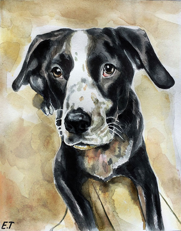 custom watercolor painting of black and white dog