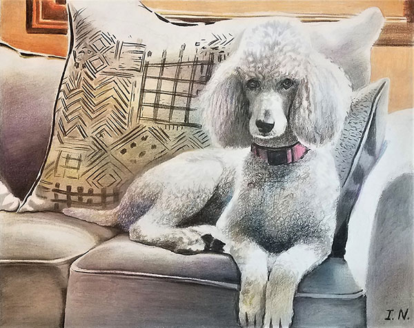 custom colored pencil portrait of white poodle on couch