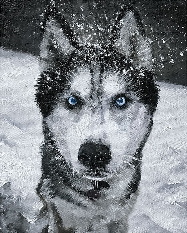 Husky Siberiano olio su tela ritratto da fotografia