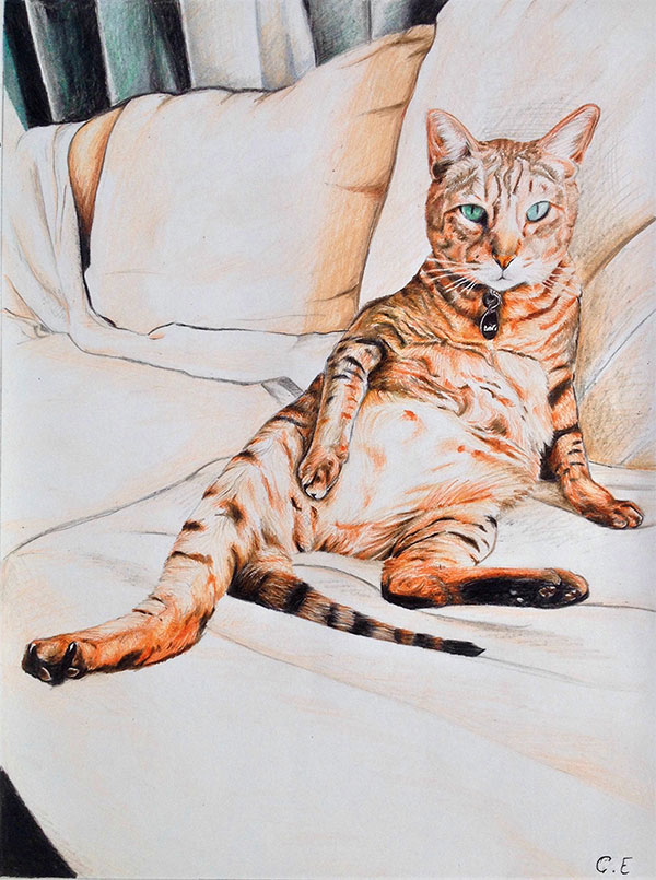 custom colored pencil of cat sitting up right on couch