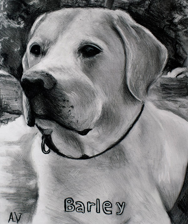 picture to charcoal close up portrait of dog