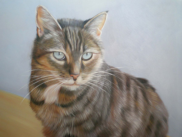 Custom oil handmade portrait of a shabby grey cat