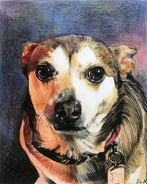 custom colored pencil drawing of a dog