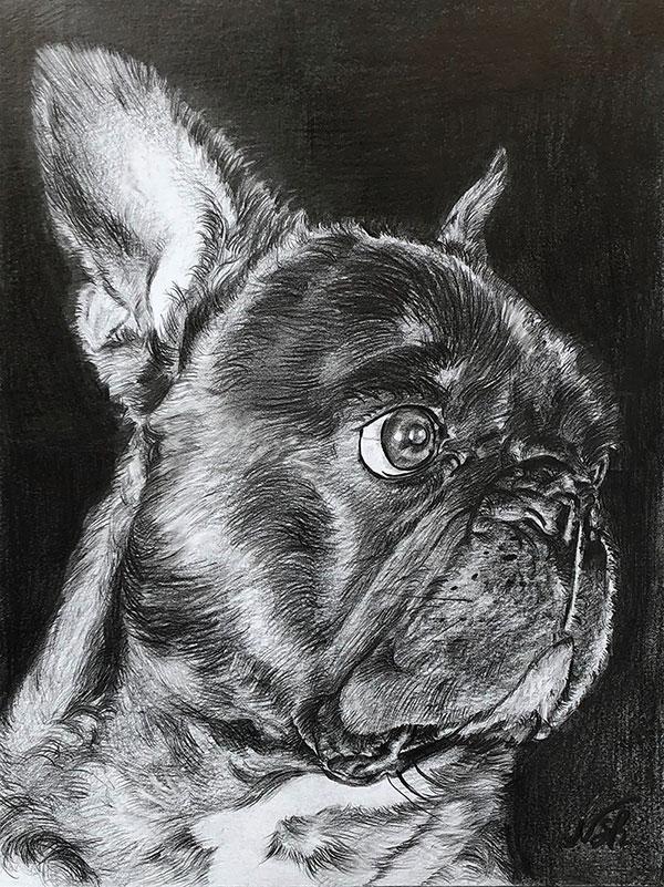 custom pencil drawing of a pug
