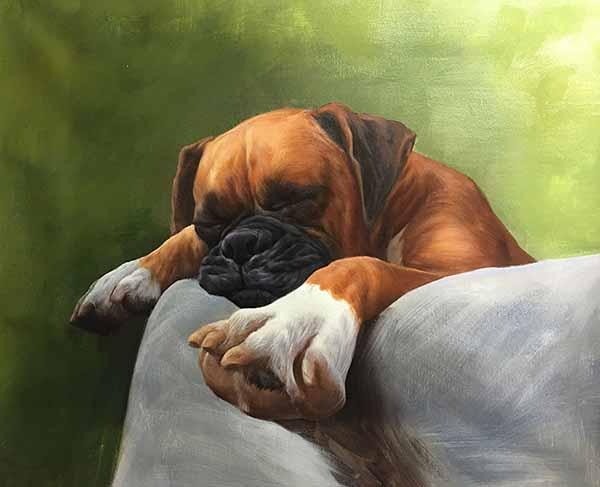 dog portrait sleeping pet