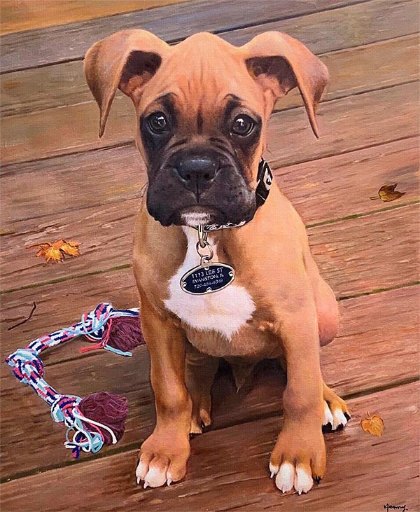 cute small bulldog o a brown poarch