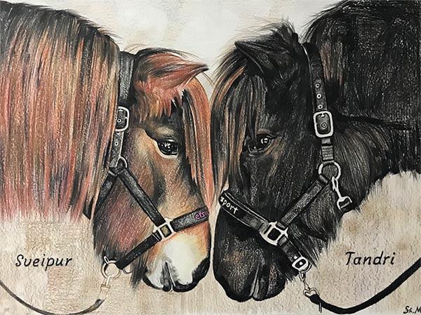Portrait de chevaux