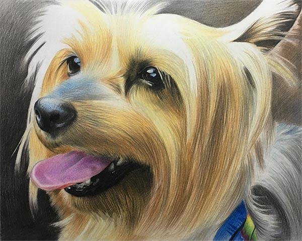 Hundeportraits auf Leinwand