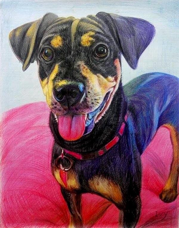 art canin sur mesure