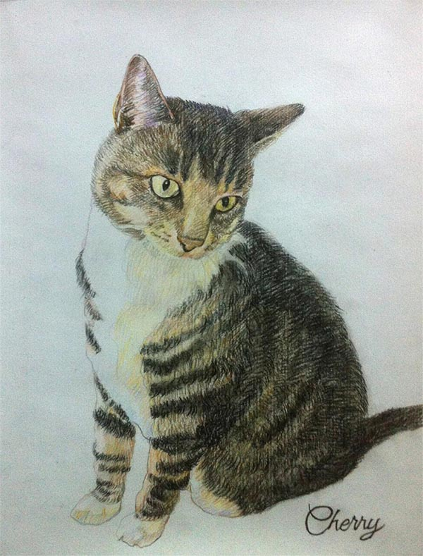 Katzenportraits auf Leinwand