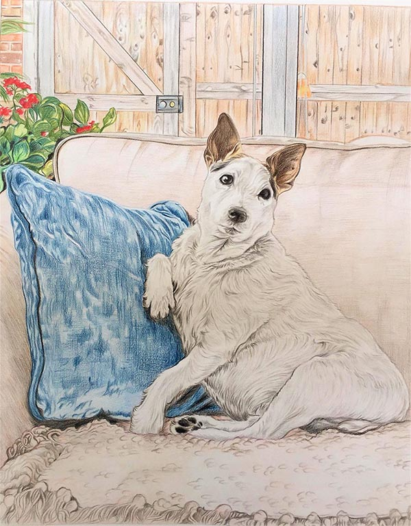 dog portraits on canvas color pencil drawing