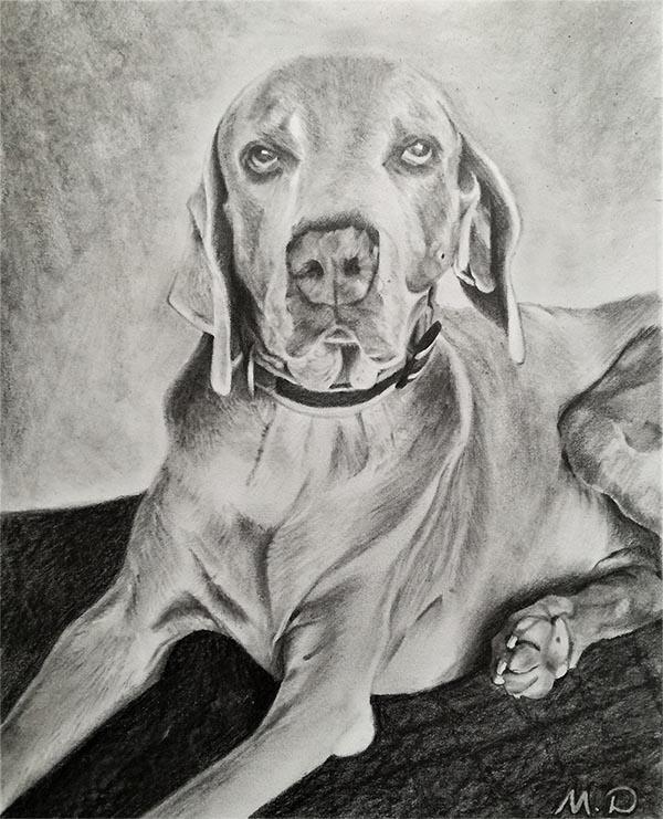 custom pencil drawing of a big dog