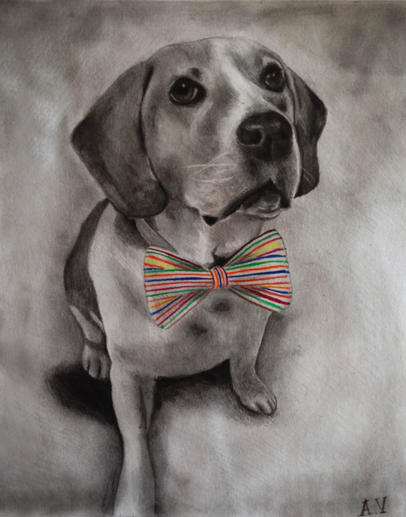 custom colored pencil of dog with a bow tie