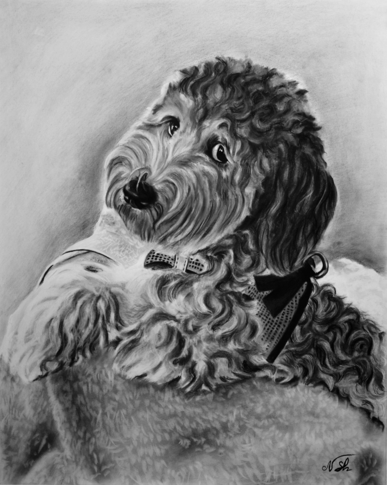 photo to custom charcoal drawing of curly dog