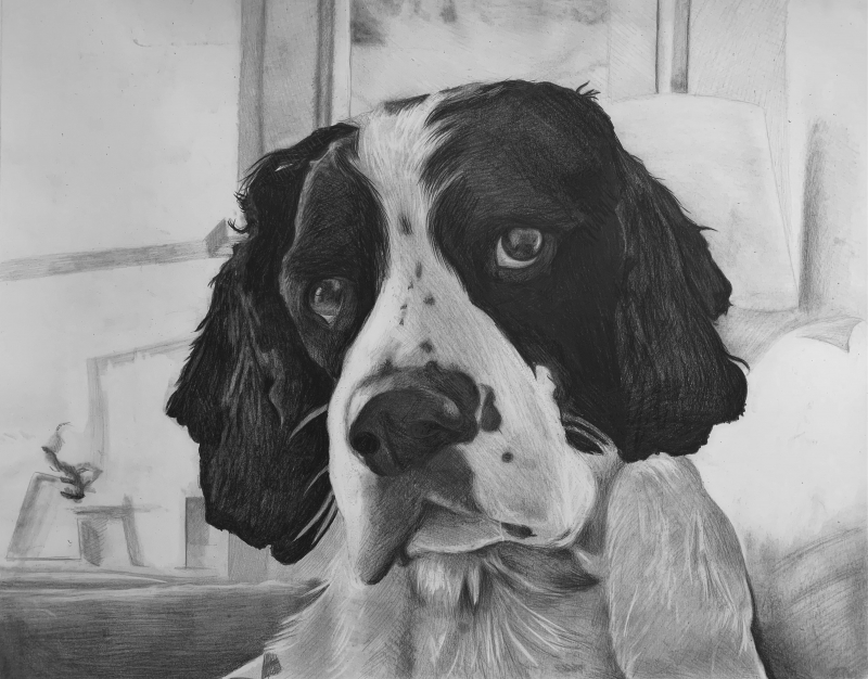Close up black pencil artwork of a dog
