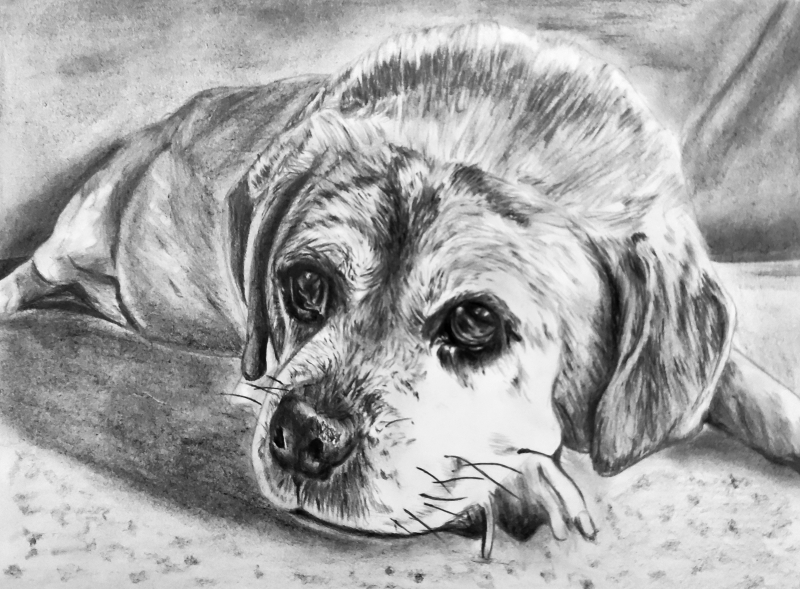 Beautiful charcoal painting of a dog