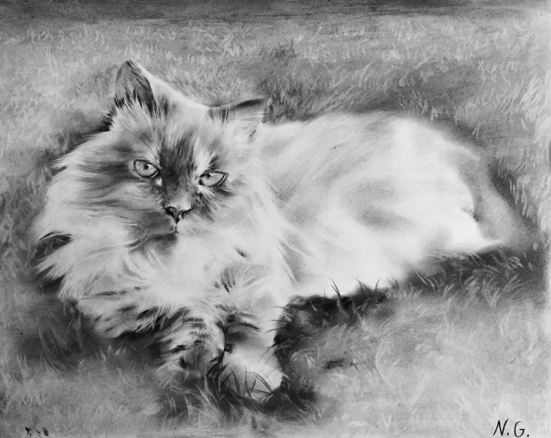 Beautiful charcoal drawing of a cat