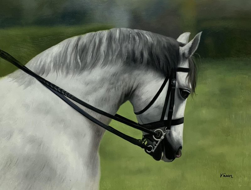 Beautiful hand drawn oil painting of a white horse