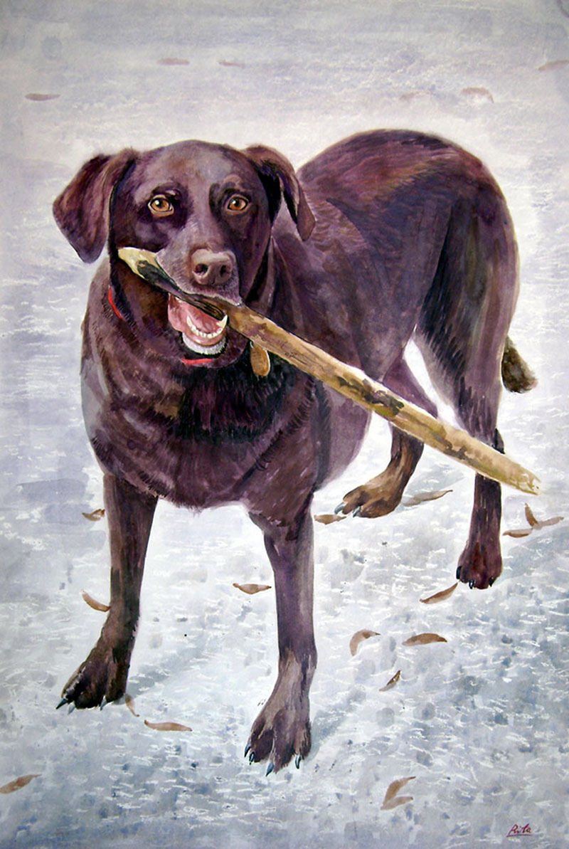 custom watercolor painting of brown dog carrying a stick