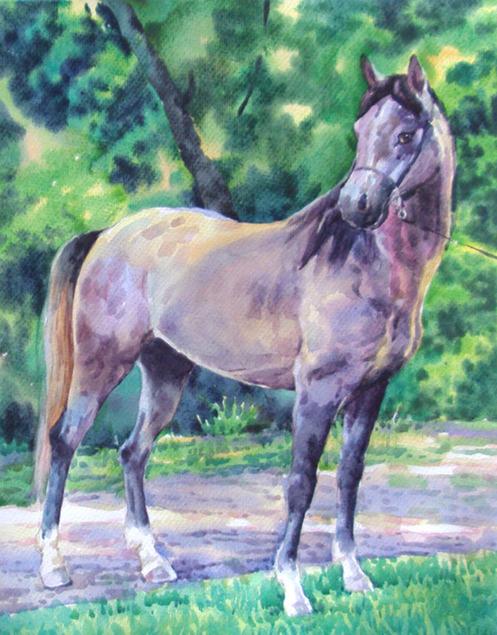 portrait cheval