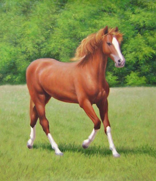 realistic horse portrait on canvas