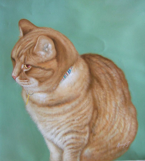 orange cat pet portrait