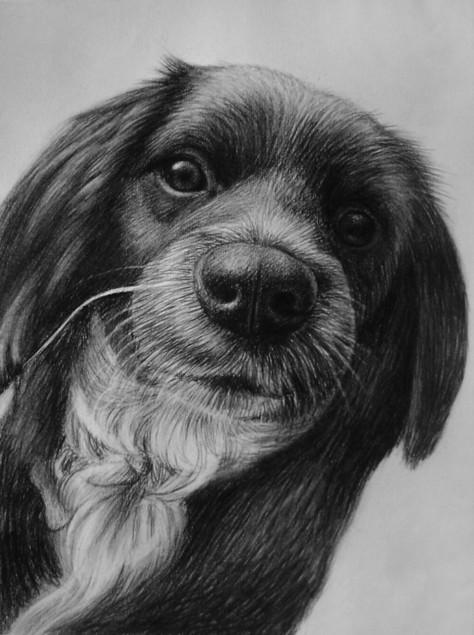 Carboncino da foto cane