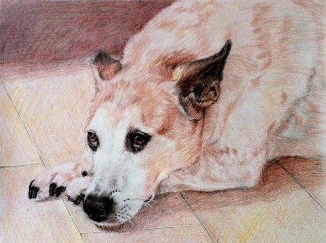 pet portraits - dog pencil sketch