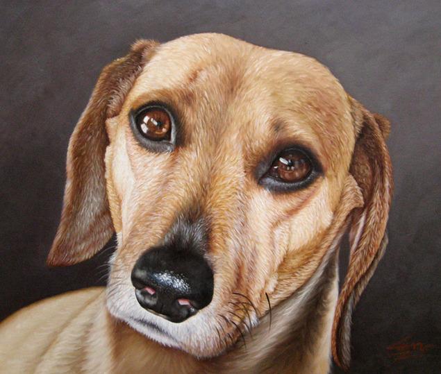 dog portrait cute pet